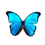 motyl_uvod_1