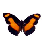 motyl_uvod_2