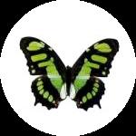 motyl_uvod_3